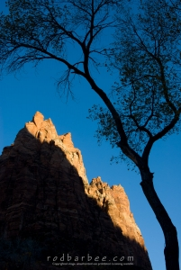 Silhouette of cottonwood in the Court of the Patriarchs. Mt. Moroni in background.